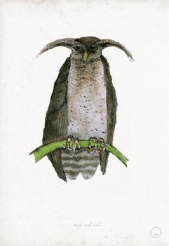 Barred Eagle Owl - artist signed print